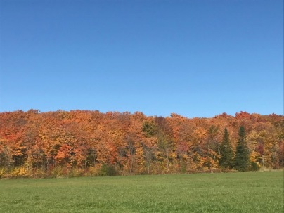 Image of fall foliage in Quebec