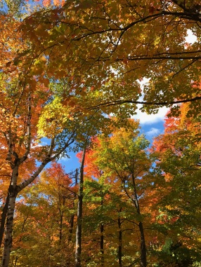 Image of fall foliage in Quebec City