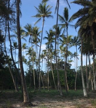 hawaii-palm-trees-2
