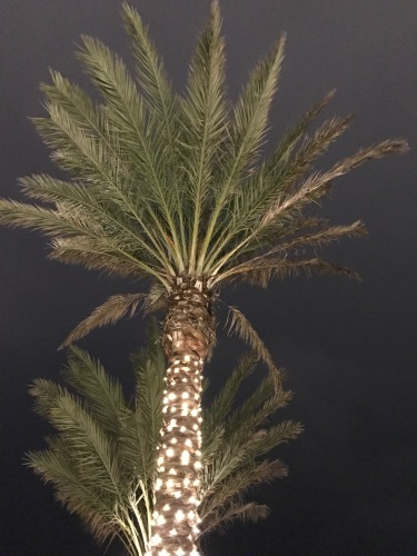 Palm Tree Decorated for Christmas