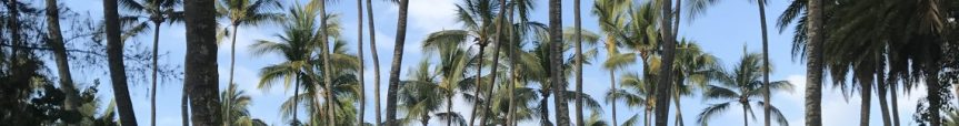 cropped-hawaii-palm-trees.jpg