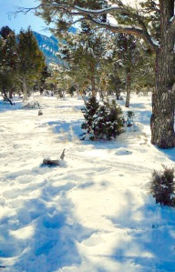 Image of Mt Charleston in the Snow