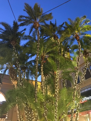 Image of palm trees decorated for Christmas.