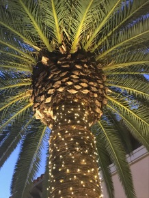 Image of a palm tree decorated for Christmas