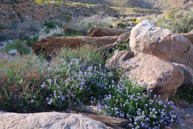 Image of desert flowers