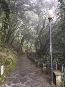 Image of Santuario di Montallegro