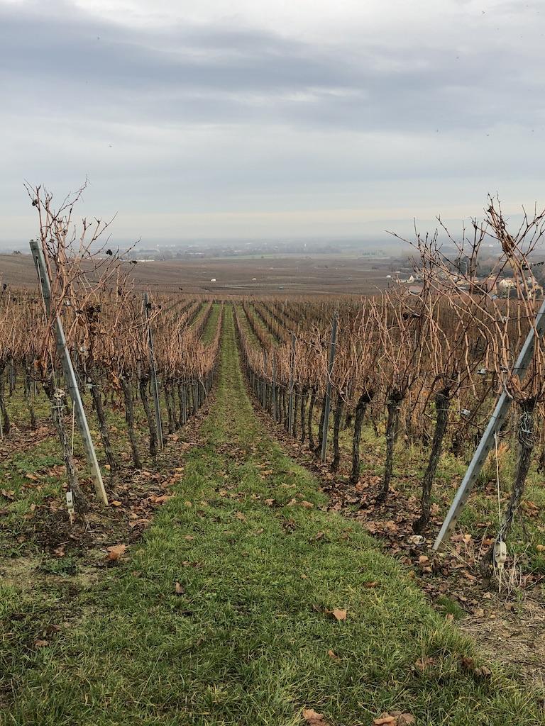 Image of vineyards near Riquewihr